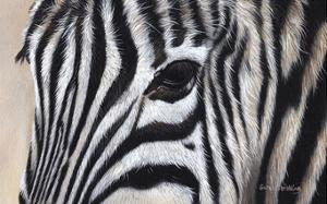 Zebra Eyes by Sarah Stribbling