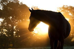Beautiful Arabian Horse Silhouette Against Morning Sun Shining Through Haze And Trees by Sari ONeal
