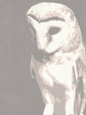Barn Owl by Sasha Blake