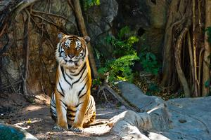 Female Wild Tiger From Thailand by sasilsolutions