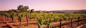 Sattui Winery, Napa Valley, California, USA