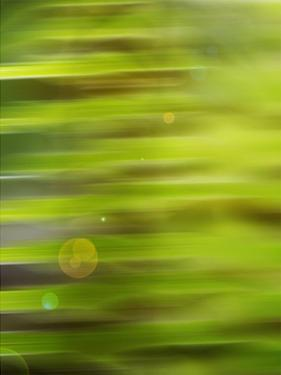 Abstract green flora by Savanah Plank