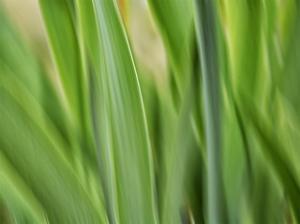 Flora blades by Savanah Plank