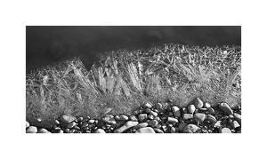 Frozen River's Edge by Savanah Plank