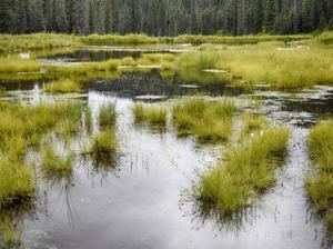 Hatcher's Pass creek marsh by Savanah Plank