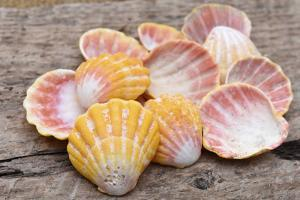 Hawaiian sunrise shells by Savanah Plank