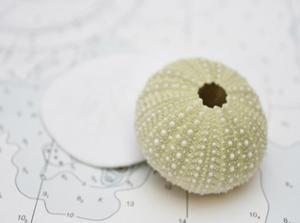 Nautical Urchin by Savanah Plank