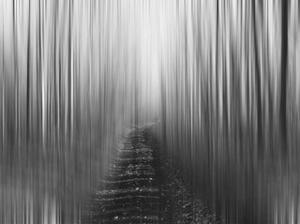 Path by Savanah Plank