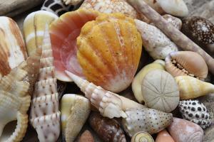 Tropical shell still-life by Savanah Plank
