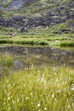 Alaska, Hatchers Pass, Old Mining Cabins