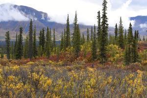 USA, Alaska, Denali Highway scenery in the fall. by Savanah Stewart