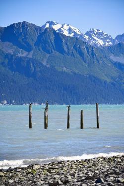 USA, Alaska, Seward, boat harbor. Old piling with cormorants. by Savanah Stewart