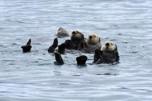 USA, Alaska, Seward, otter rafts by Savanah Stewart