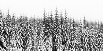 Washington State, Crystal Mountain Area. Winter Snow