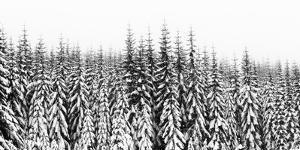 Washington State, Crystal Mountain Area. Winter Snow by Savanah Stewart