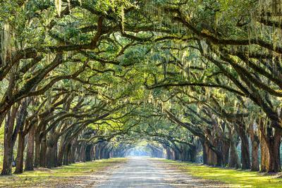 https://imgc.allpostersimages.com/img/posters/savannah-georgia-usa-oak-tree-lined-road-at-historic-wormsloe-plantation_u-L-Q105K6T0.jpg?p=0