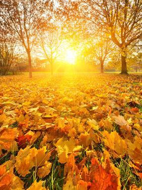 Colorful Foliage in the Autumn Park by sborisov