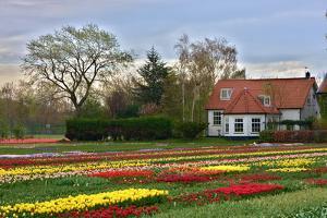 Multicolored Tulips Field in Keukenhof, the Netherlands by sborisov