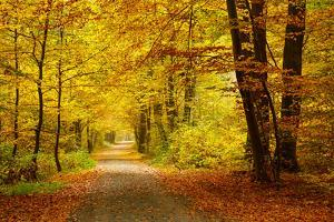 Pathway in the Autumn Forest by sborisov