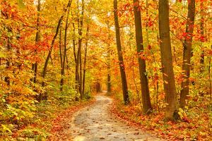 Pathway through the Autumn Forest by sborisov