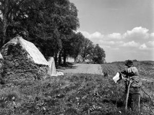 Scarecrow on a Farm
