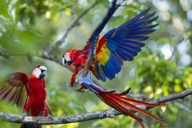 Affordable Macaw Posters for sale at AllPosters com