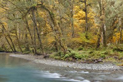 https://imgc.allpostersimages.com/img/posters/scenic-of-quinault-river-in-the-olympic-national-park-washington-usa_u-L-PN73J30.jpg?artPerspective=n