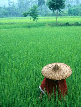 https://imgc.allpostersimages.com/img/posters/scenic-of-rice-fields-and-farmer-on-yangtze-river-china_u-L-P58ED00.jpg?p=0