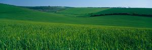 Scenic view of a field, South Downs, South Downs National Park, Sussex, England