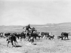 Cowboy in den USA, 1928 by Scherl