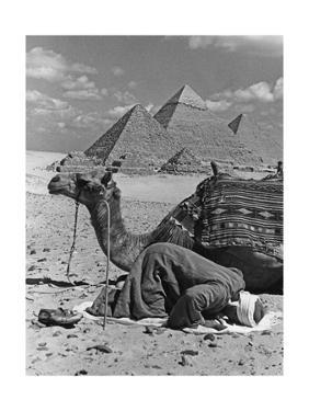 Gebet vor den Pyramiden von Gizeh, 1942 by Scherl