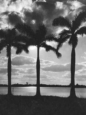 Hawaii, 1930 by Scherl