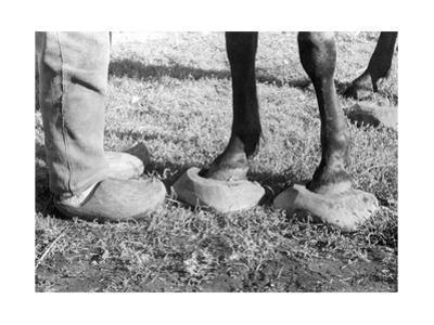 Pferd mit Holzschuhen in Ostpreußen, 1939