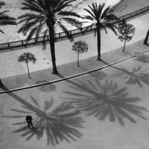 Palms on the 'Quai Des Etats Unis' in Nice, 1932 by Scherl S?ddeutsche Zeitung Photo