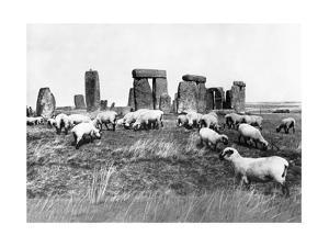 Schafe bei Stonehenge in England, 1933 by Scherl