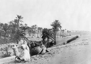 Dromedary in Tunisia, 1926 by Scherl Süddeutsche Zeitung Photo