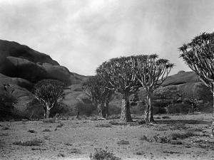 Landscape in Namibia, 1921 by Scherl Süddeutsche Zeitung Photo