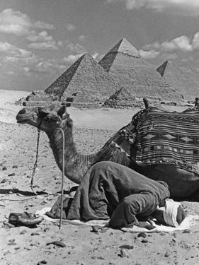 Prayer in Front of the Pyramids of Giza, 1942 by Scherl Süddeutsche Zeitung Photo