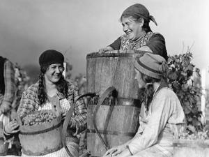 Weinlese in der Schweiz, 1930 by Scherl