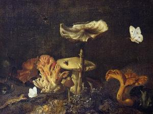 Still Life with Mushrooms and Butterflies by Schrieck