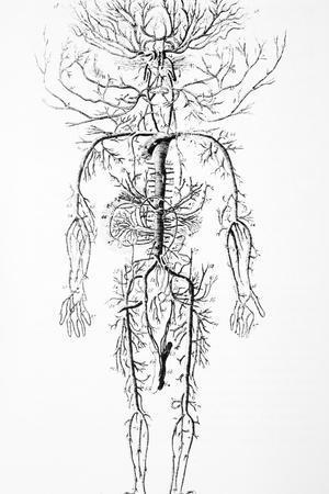 Arterial System, 18th Century