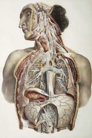 Autonomic Nerves, 1844 Artwork