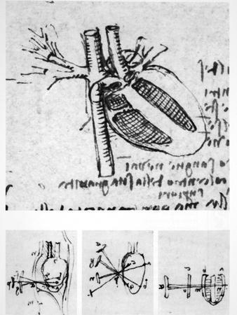 Heart Anatomy, 16th Century