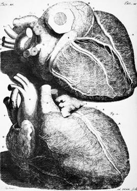 Heart Anatomy, 18th Century by Science Photo Library