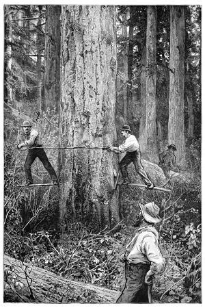 Plantation Forestry, 19th Century