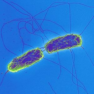 Salmonella Bacteria, SEM by Science Photo Library