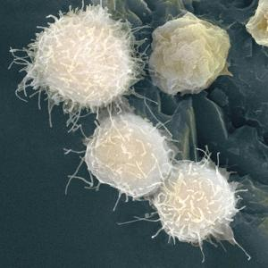 Stem Cells, SEM by Science Photo Library