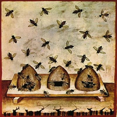 Beekeeping, Arabic Medical Book, 14th C by Science Source