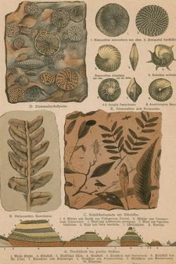 Geology and Paleontology, 1886 by Science Source