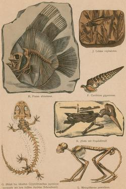 Illustrated Geology and Paleontology by Science Source